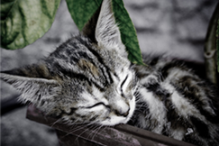 Day Dreaming Cat